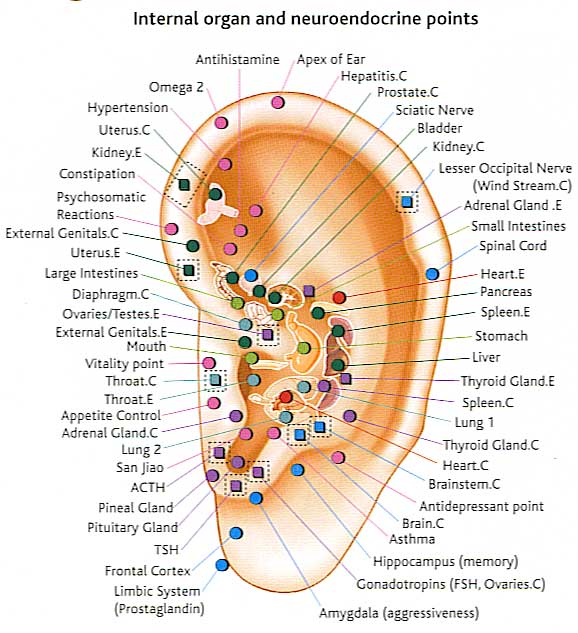 Auriculotherapy-Chart_mini